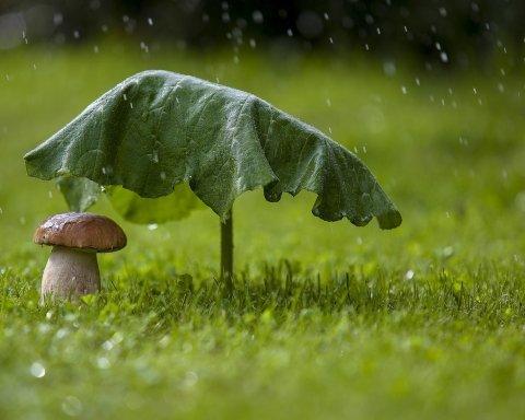 Замість серпня прийшов жовтень: яким областям сьогодні не пощастить з погодою