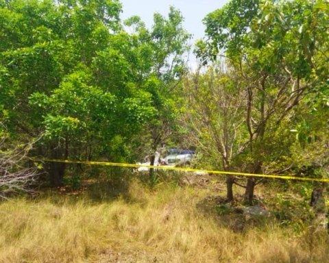 У Мексиці розбився літак, всі загинули: з'явилися кадри з місця трагедії