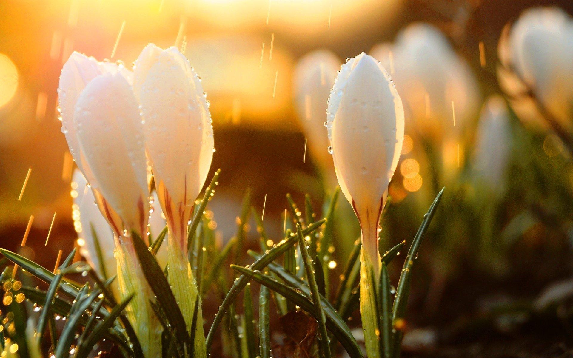 картинки ранней весны на телефон часть