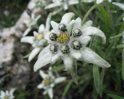 Заморозки в мае: синоптик огорчила прогнозом погоды на весну