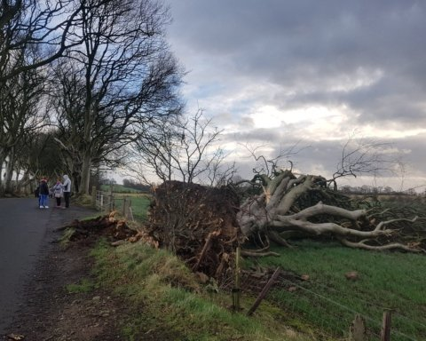 Есть жертва: в России дерево упало на детей во время прогулки
