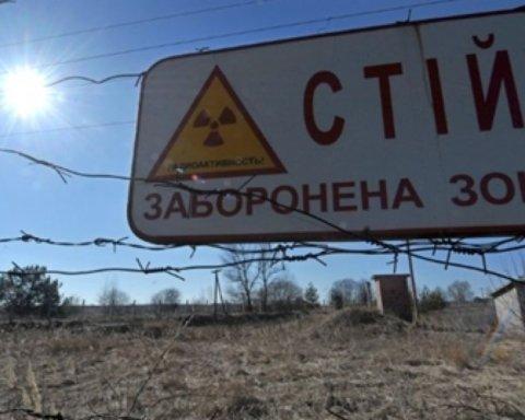 Вчені у Чорнобильській зоні відчуження зафільмували, як ластівки годують пташенят
