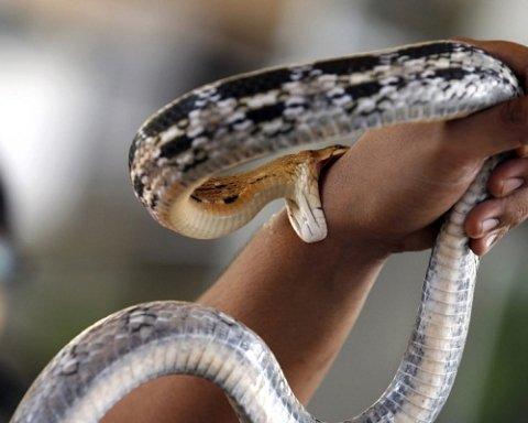 Супрун розповіла, як зберегти життя, якщо вас вкусила змія