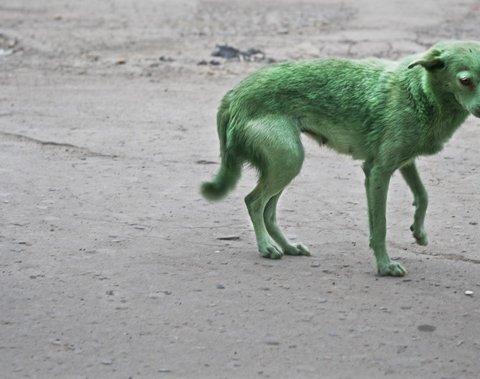 В Запоріжжі раптово позеленіли собаки: з'явилося відео