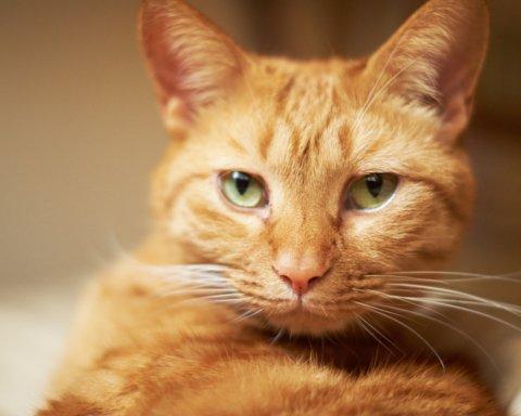 """Нахабний кіт """"вполював"""" собі вечерю на прилавку київської крамниці"""