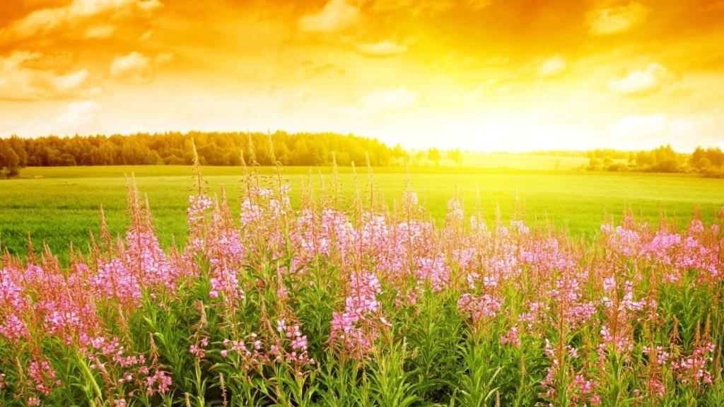 Спека і грози: синоптики спрогнозували погоду на найближчі дні