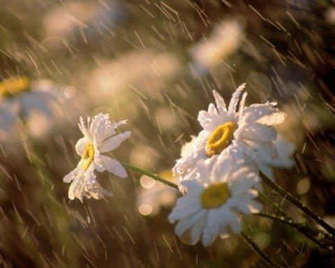 Дожди и прохлада: какая погода будет в Киеве в начале августа