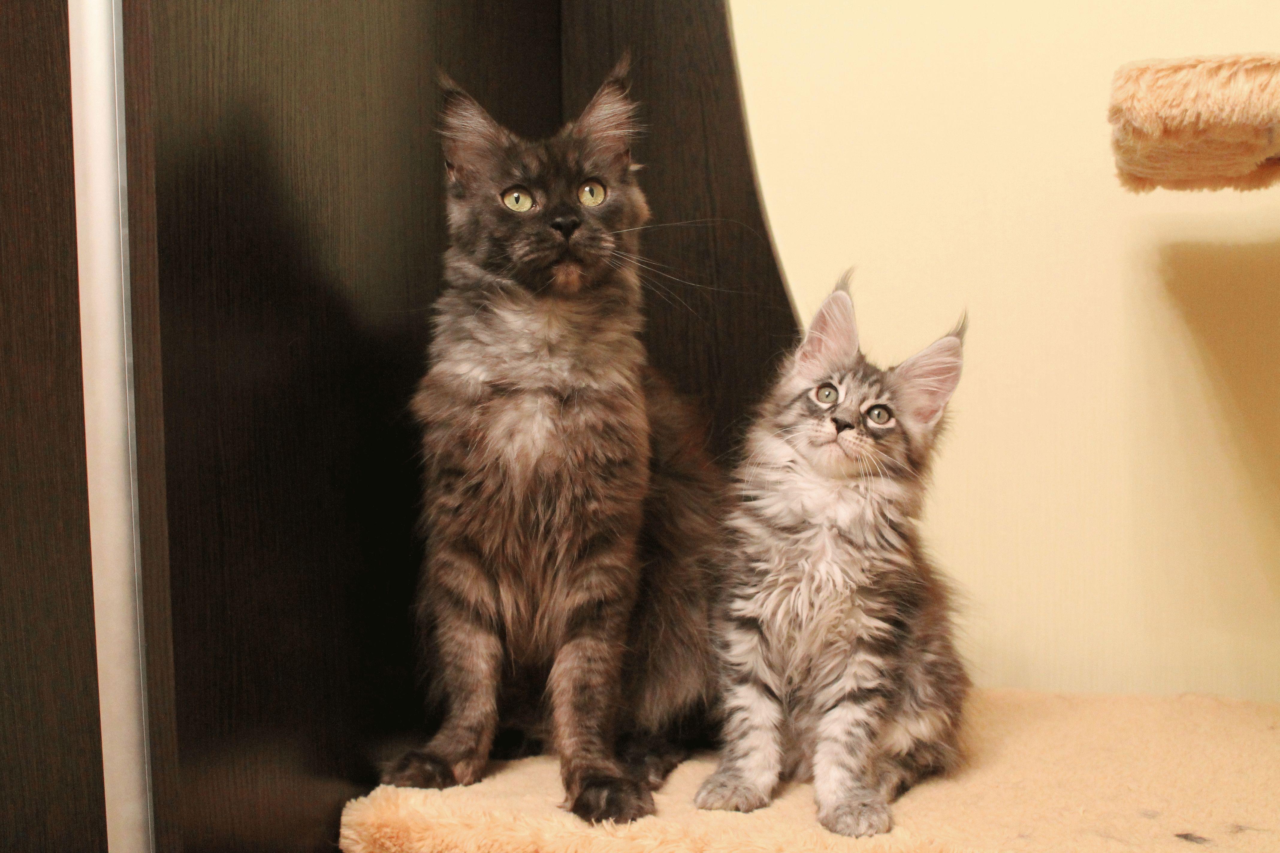 Всесвітній день котів: цікаві факти про домашніх улюбленців