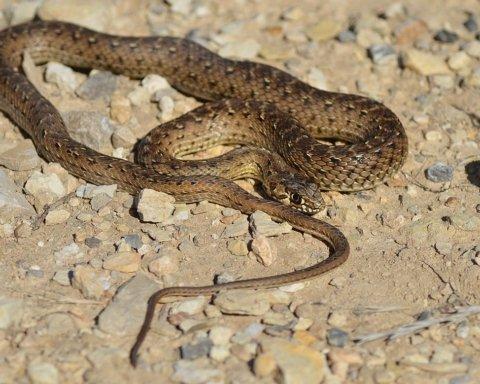 Будьте обачні: жінка з дитиною потрапили в реанімацію через змій