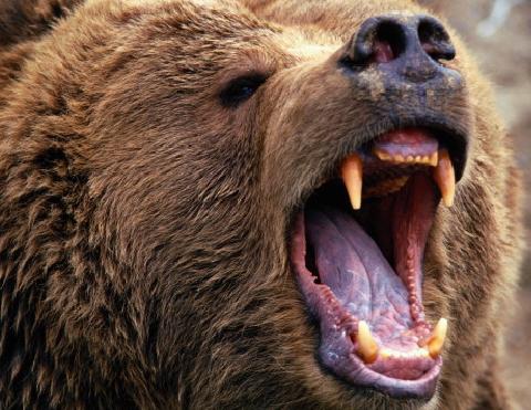 Турист справился с медведем гризли с одним только ножом