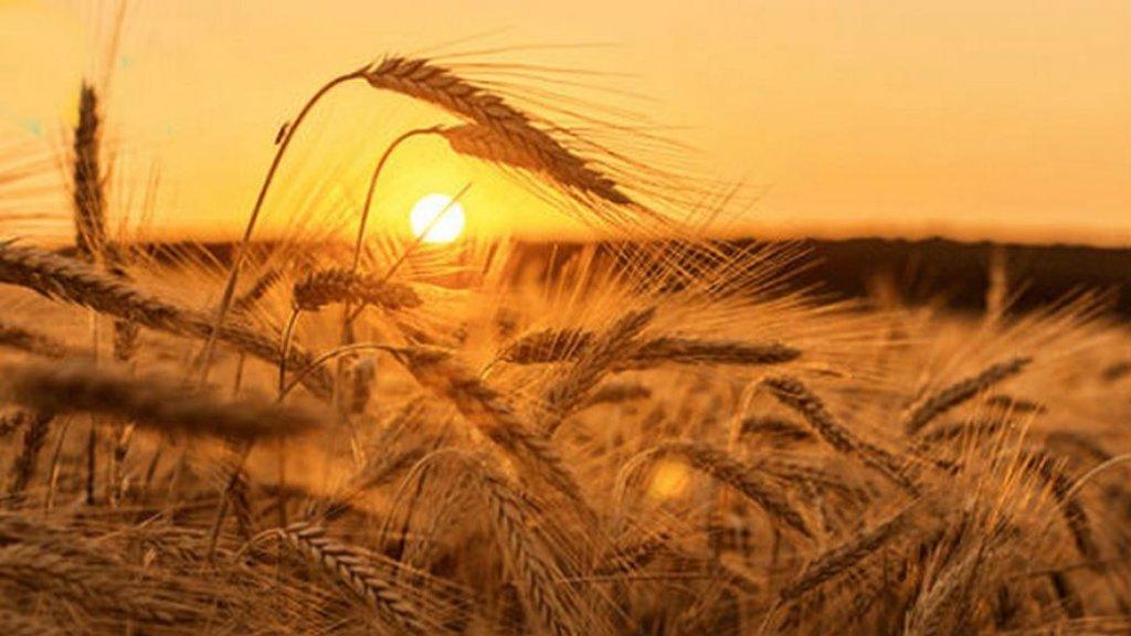 Укргидрометцентр опубликовал прогноз погоды на август