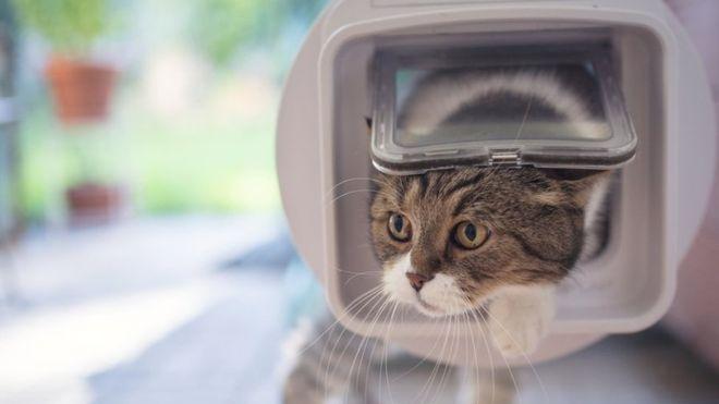 Искусственный интеллект против кота: новая разработка инженера Amazon 2019