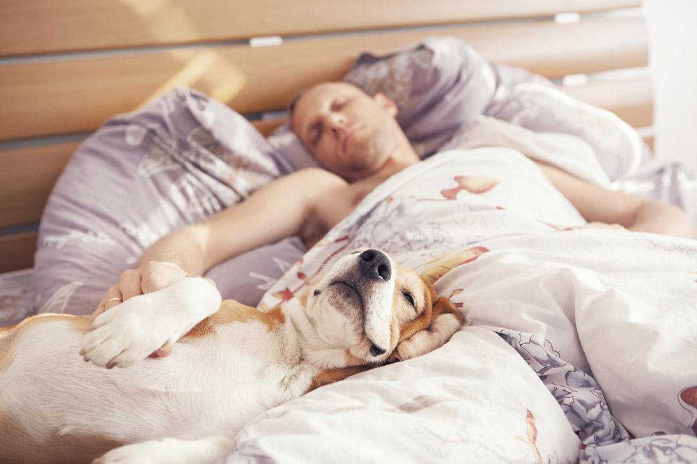 Лікарі пояснили, чому не можна спати з домашніми улюбленцями