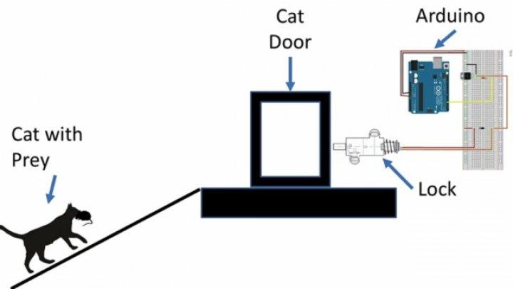 Искусственный интеллект против кота:разработка инженера Amazon