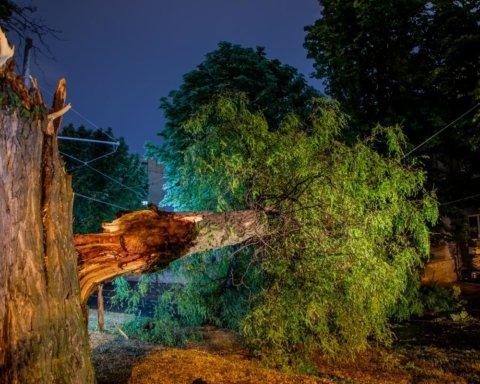 Результат непогоды в Украине: трое погибших, сломанные деревья и оторванные крыши