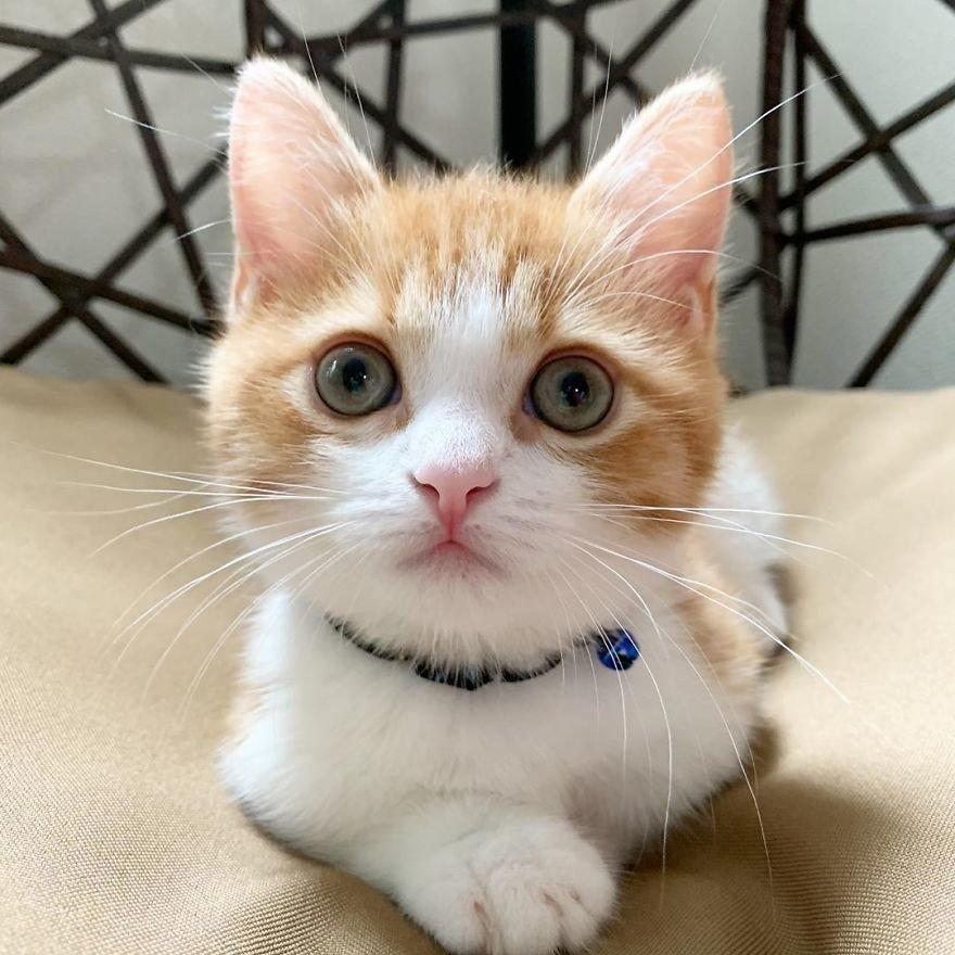 Невероятно милый котенок прославился из-за потешной позы для сна