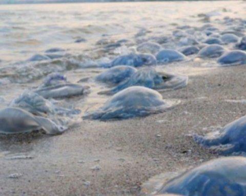Украинский курорт на Азовском море атаковали медузы: впечатляющие фото