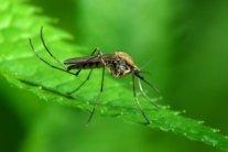 У Дніпрі після укусу комара виявили смертельну хворобу
