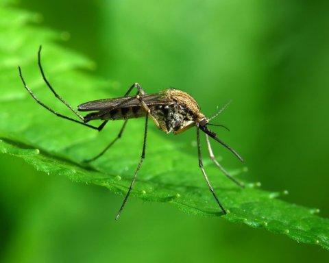 В Днепре после укуса комара обнаружили смертельную болезнь