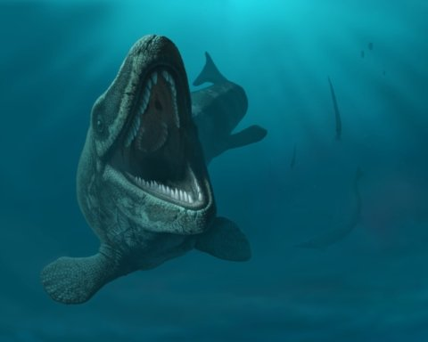 В Канаде случайно нашли кости из эры динозавров-гигантов