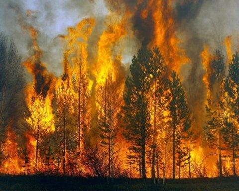 Спасатели предупредили украинцев о сверхвысокой пожарной опасности