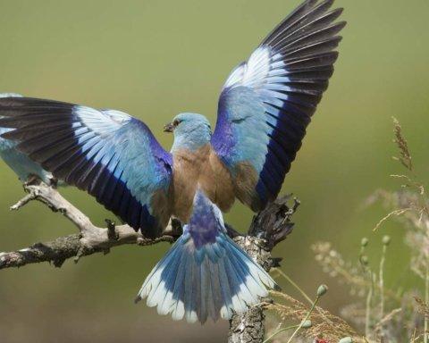 У Кривому Розі помітили зниклий вид птахів