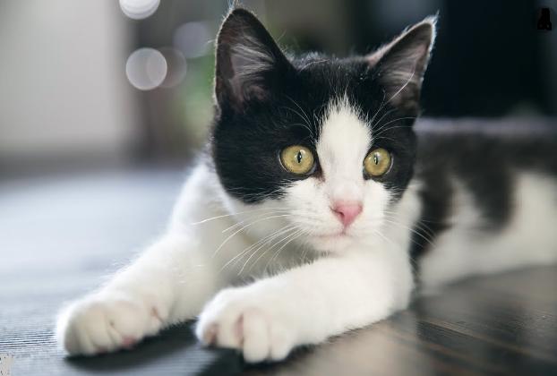 Ученые подтвердили, что кошки способны вырабатывать антитела к COVID-19