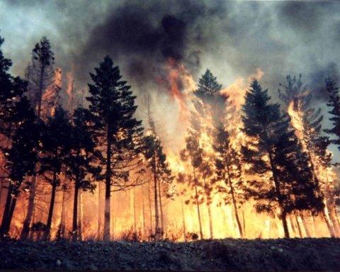 Осторожнее на шашлыках: ГСЧС предупредила украинцев про самую высокую пожарную опасность