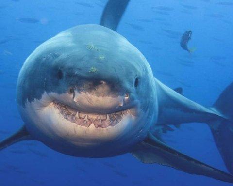 Вчені зняли на відео акулу-монстра розміром з підводний човен