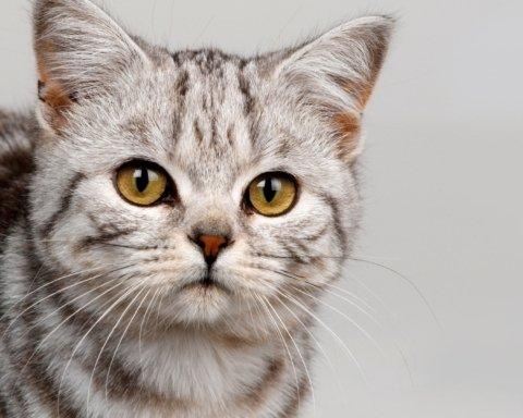 Медики виявили сприятливий вплив кішок на їх господарів: що відомо
