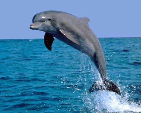 Дельфины устроили туристам необычное шоу на Азовском море