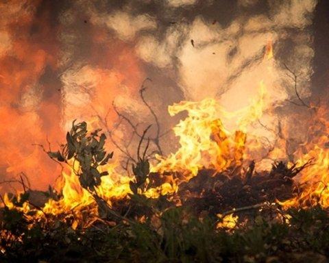 Пожежу видно з космосу:  у Бразилії продовжує горіти ліс