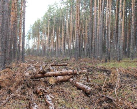 Незаконная вырубка леса на Харьковщине: нанесен ущерб на десятки миллионов
