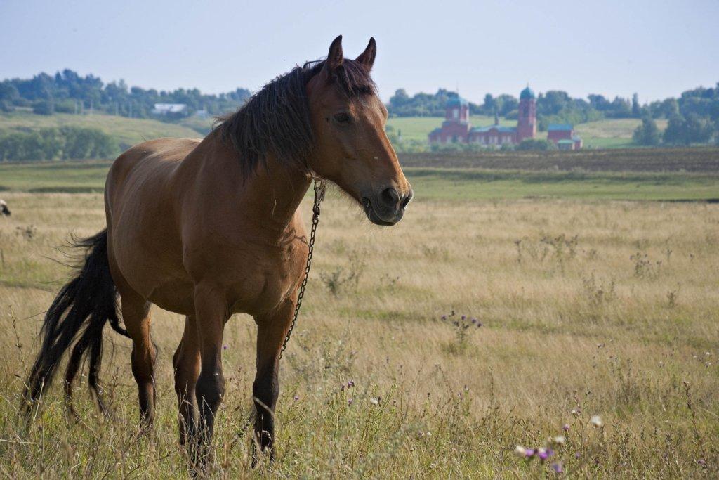 Тело было привязано к лошади: в Харькове нашли мертвую школьницу
