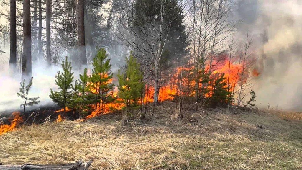 Біля Херсона загорівся ліс: на місце НП виїхали півсотні рятувальників