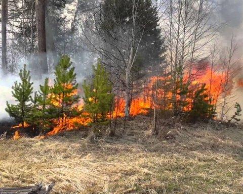 Возле Херсона загорелся лес: на место ЧП выехали полсотни спасателей