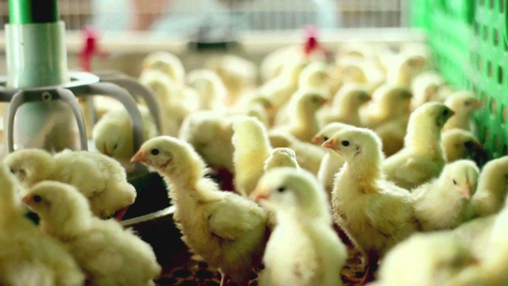 Второй раз за лето: на Киевщине снова горит птицефабрика