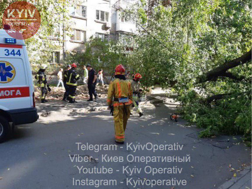 Огромное дерево упало на женщину прямо в центре Киева: первые кадры с места