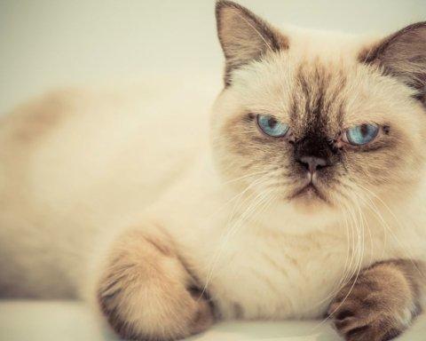 Сердитий кіт на прізвисько «демон» підкорив Мережу