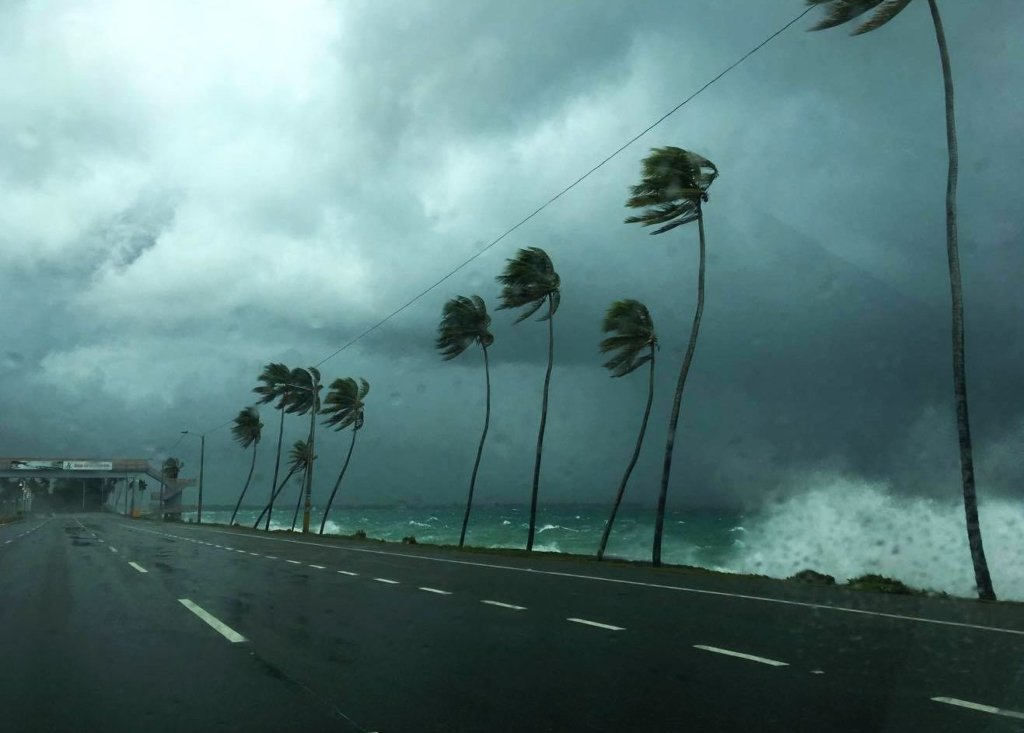 Жителька Багамських островів врятувала 97 собак від урагану