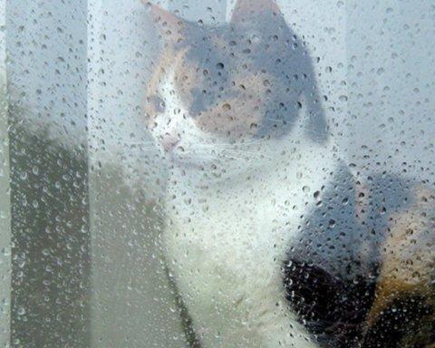 В Украину возвращаются дожди, грозы и холод: погода на субботу