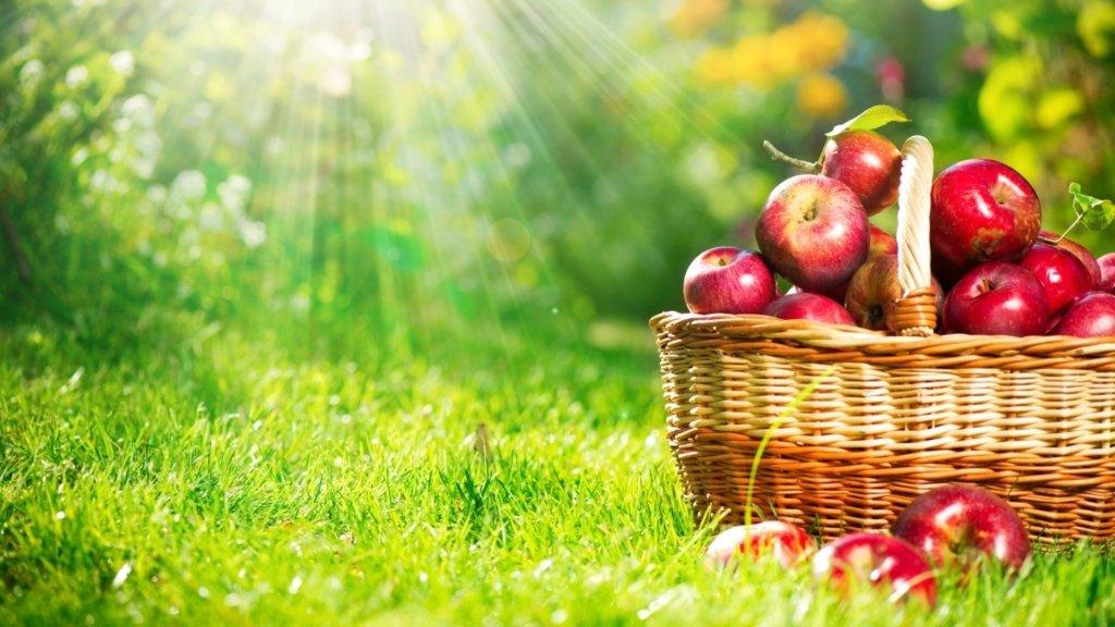 Ціни на яблука в Україні обвалилися: що сталося