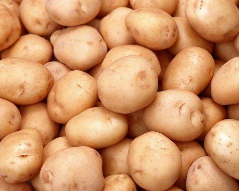 Дороже, чем у соседей: в Украине зафиксировали рекордные цены на картофель