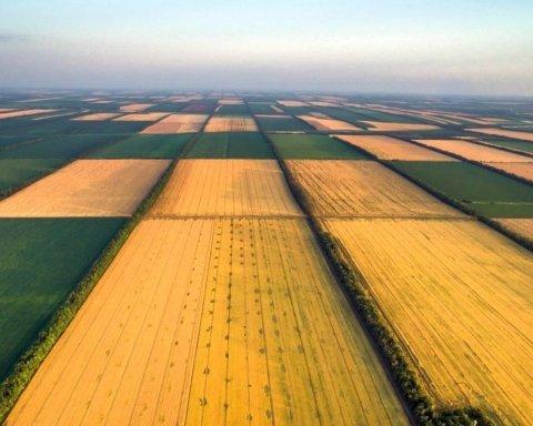 Больше половины украинцев выступают за создание рынка земли