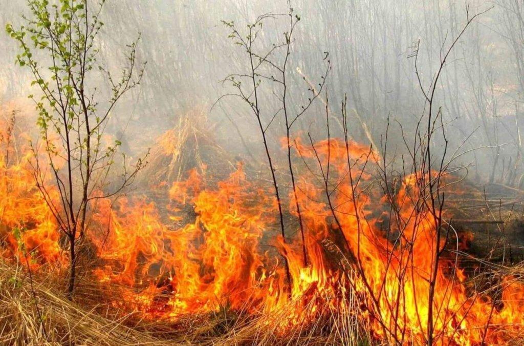 Рятувальники ДСНС оголосили надзвичайний рівень пожежної небезпеки