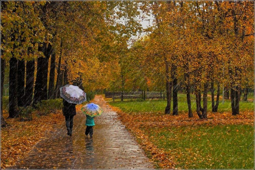 Украину накроют дожди и туман: прогноз погоды на 31 октября
