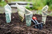 Зеленский открыл рынок земли: как получить землю бесплатно