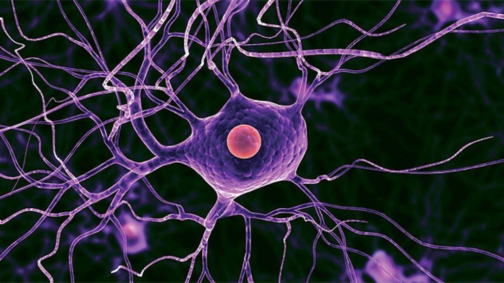 Знайдено мозкові клітини, які заважають згадати сни