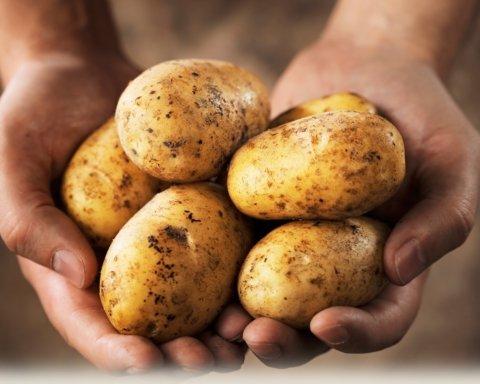 Картопля подорожчає втроє: експерт пояснив, чому