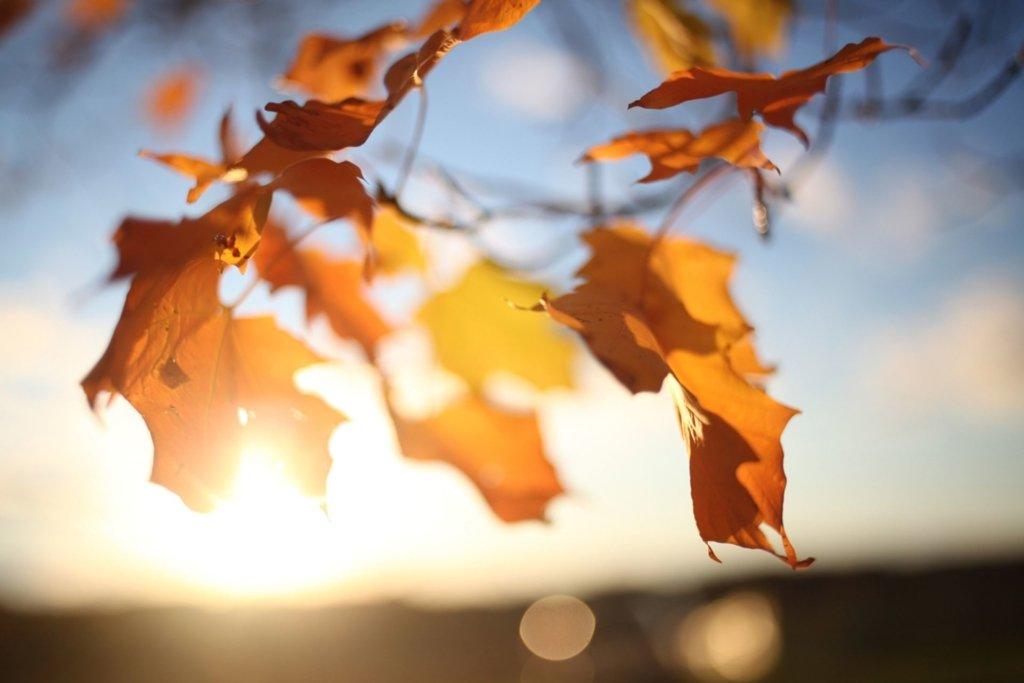 Тепло закончилось, наступают холода: синоптики озвучили прогноз погоды на 17 сентября